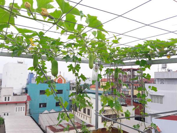 Giàn dây leo cho trái tạo bóng cho không gian vườn